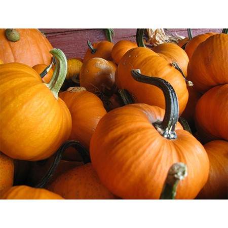 Picture of Pumpkin - 1 Kg
